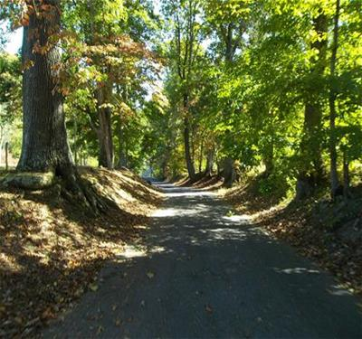 Paved Trail Through a Wooded Area